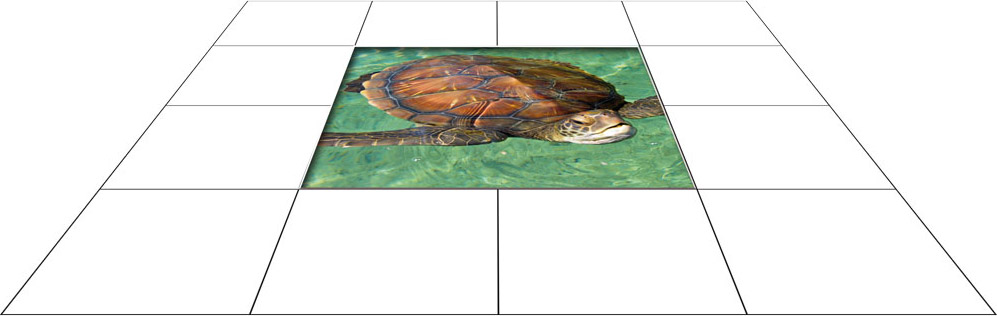 panele podłogowe 60 x 60 żółw