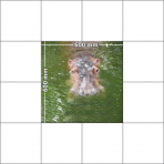 panele podłogowe 60 x 60 hipopotam