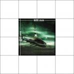 panele podłogowe 60 x 60 Rekin przy dnie