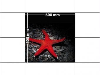 panele podłogowe 60 x 60 Rozgwiazda