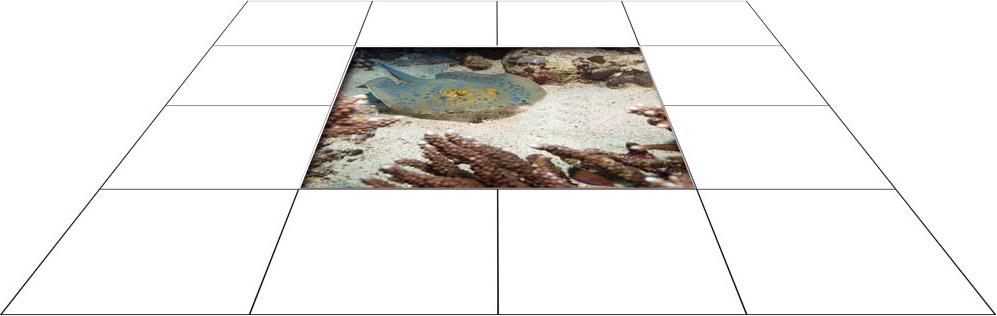 panele podłogowe 60 x 60 Płaszczka