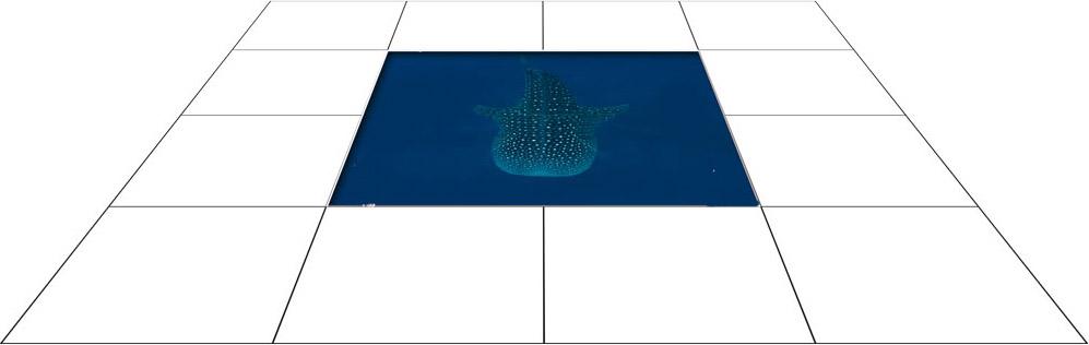 panele podłogowe 60 x 60 Rekin tygrysi